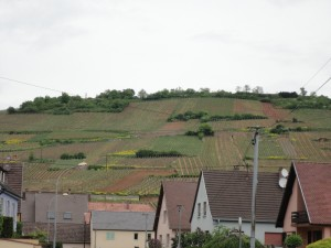 アルザスのワイン街道 ぶどう畑